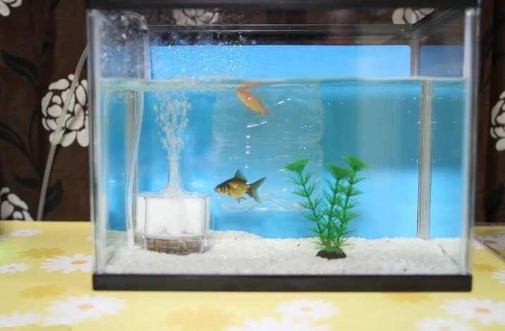 家里鱼缸放哪里风水最好?有哪些摆放禁忌