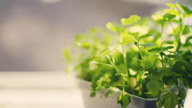 卧式、阳台、客厅养花有哪些风水禁忌?盆花要如何摆放?