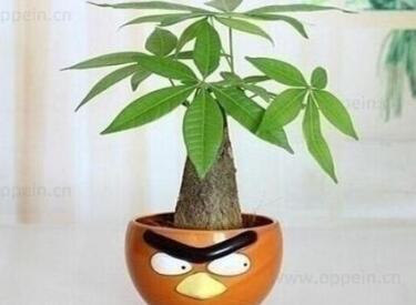 阳台种什么植物最旺风水?摆放哪些植物比较好?