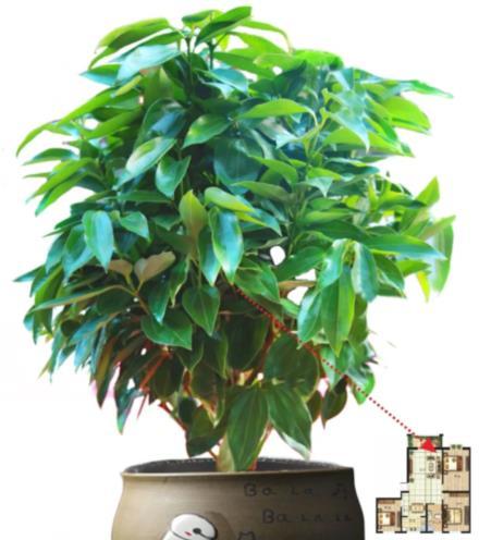 家装植物界 旺宅植物都在这里