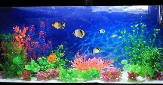 要注意!客厅鱼缸摆放的风水和禁忌