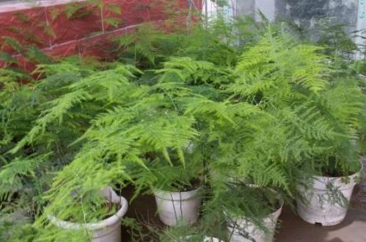 养在室内可以净化空气的3种植物,一起来看看吧!